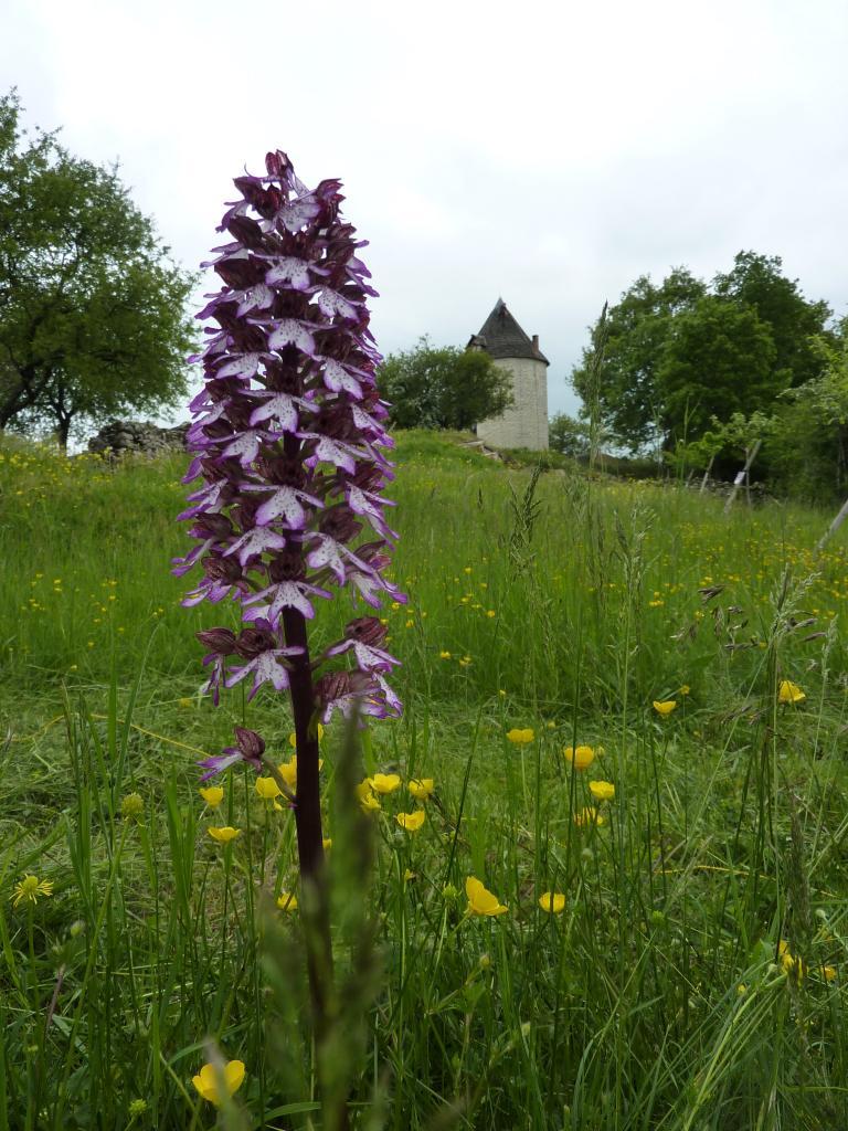 En mai & juin : vive les orchidées !
